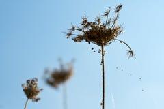 De bloem van Whitered voor droefheid Stock Foto