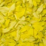 De bloem verlaat patroon, achtergrond Close-up Stock Foto's