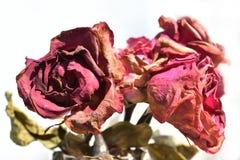 de bloem verwelkt Nam toe Stock Afbeelding