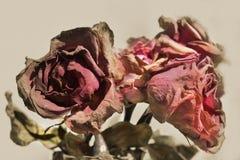 de bloem verwelkt Nam toe Royalty-vrije Stock Foto's