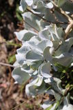 De bloem in vitoriastaat nam tuin, Melbourne, Australië toe Royalty-vrije Stock Foto