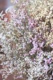 De bloem wordt genoemd statice Stock Afbeeldingen