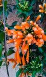 De bloem is zeer aardige HD Stock Afbeeldingen
