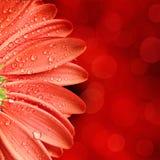 De bloemachtergrond van de lente Stock Fotografie