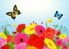 De bloemachtergrond van de zomer Royalty-vrije Stock Afbeeldingen