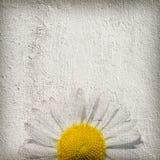 De bloemachtergrond van Grunge Stock Afbeeldingen