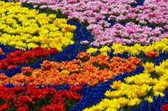De bloembed van de lente stock foto's