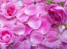 De bloemblaadjes namen roze, dagvalentijnskaart, achtergrond toe stock fotografie