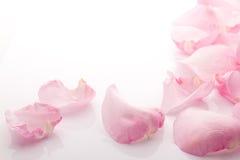 De bloemblaadjes namen toe. Stock Foto