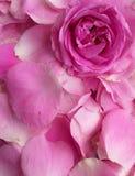 De bloemblaadjes namen voor verjaardag, achtergrond toe stock afbeeldingen
