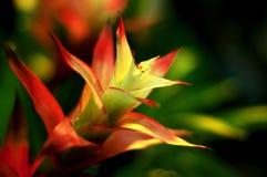De bloemblaadjes richtten rood jpg Royalty-vrije Stock Afbeelding