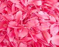De bloemblaadjes van de bloem Stock Afbeelding