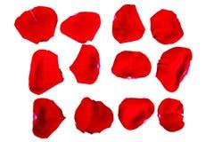 De bloemblaadjes van een rood namen toe Royalty-vrije Stock Foto's