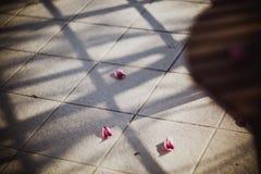 De bloemblaadjes van een roze tulp ligt op een vloer op zon stock afbeeldingen