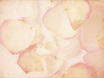 De bloemblaadjes van Grunge royalty-vrije stock fotografie