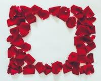 De bloemblaadjes van het bloemkader van rode rozen op een witte achtergrond Royalty-vrije Stock Afbeeldingen