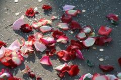 De bloemblaadjes van namen op asfalt toe stock foto