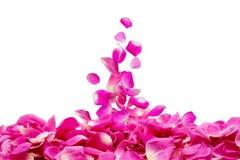 De bloemblaadjes van namen toe Stock Afbeeldingen