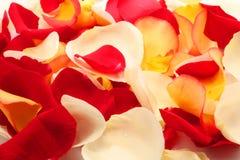 De bloemblaadjes van namen toe. Achtergrond Stock Foto's