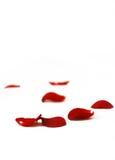 De bloemblaadjes van rozen op de witte achtergrond royalty-vrije stock afbeeldingen