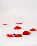 De bloemblaadjes van rozen op de witte zijdeachtergrond royalty-vrije stock fotografie