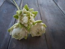 De bloemblaadjes van de vouwenlotusbloem die voor het worshiping van boeddhistische monniken in boeddhisme worden gebruikt stock fotografie