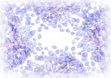 De bloemblaadjeskaart van bloemen voor uw ontwerp Stock Afbeelding