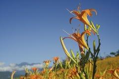 De bloembloei van de lelie met mooie landelijke scène Stock Foto's