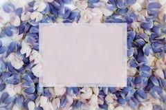 De bloembloemblaadjes van blauwe en roze lupine De ruimte van het exemplaar Stock Afbeeldingen