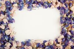 De bloembloemblaadjes van blauwe en roze lupine De ruimte van het exemplaar Stock Afbeelding