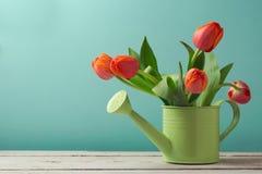 De bloemboeket van de de lentetulp in gieter met exemplaarruimte Het tuinieren concept Stock Foto