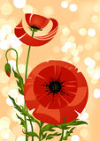 De bloembos van de papaver Royalty-vrije Stock Fotografie