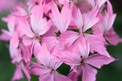 De bloemen Royalty-vrije Stock Afbeeldingen