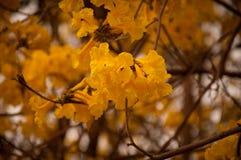 De bloemen Stock Foto