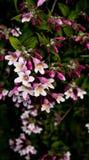 De bloemen Stock Foto's