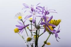 In de bloemen Royalty-vrije Stock Fotografie