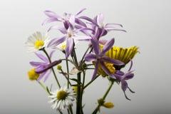In de bloemen Royalty-vrije Stock Afbeeldingen
