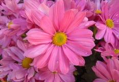 De bloemen in de winter Royalty-vrije Stock Fotografie