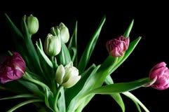 De bloemen donkere achtergrond van de close-up mooie tulp stock afbeelding