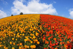 De bloemen door een oog van lensVissen Stock Foto