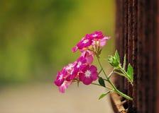 De bloemen door de gevangenis worden uitgespreid die royalty-vrije stock afbeelding