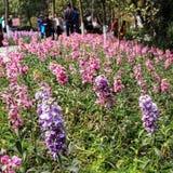 De bloemen in een park in chengdu, China Royalty-vrije Stock Foto's