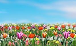 De bloemen en de hemel van de lente Royalty-vrije Stock Afbeeldingen