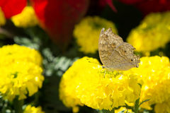 De Bloemen en de Insecten in het park Royalty-vrije Stock Fotografie