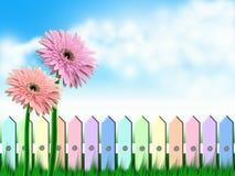 De bloemen en de omheining van Gerbera Royalty-vrije Stock Afbeelding