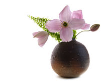 De bloemen en de varen van clematissen stock foto's