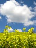 De bloemen en de wolken van de verkrachting Stock Foto