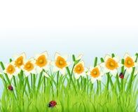 De bloemen en het gras van narcissen Royalty-vrije Stock Afbeeldingen