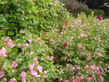 De bloemen en de installaties van de parktuin Royalty-vrije Stock Foto