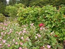 De bloemen en de installaties van de parktuin Royalty-vrije Stock Afbeelding